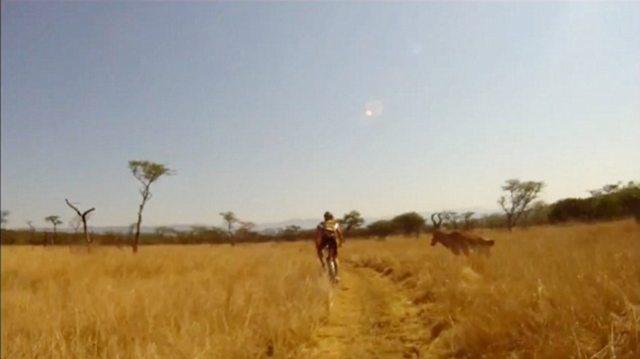 human vs antelope 2 Куда прешь, человече? Чудовищное столкновение велосипедиста с 200 килограммовой антилопой