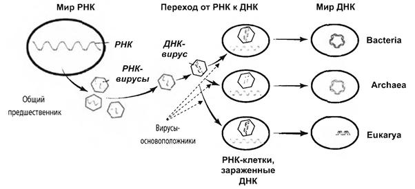 происхождение вирусов