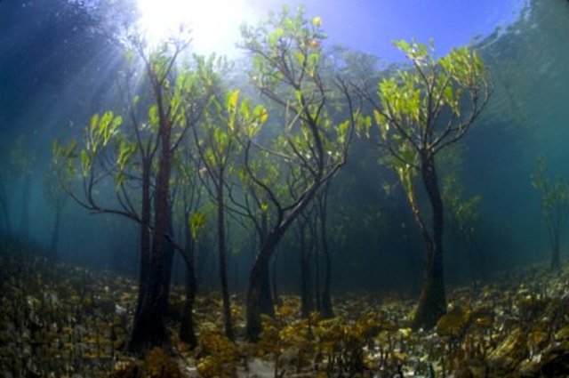 underwater wonders 6 Топ 10. Самые удивительные и невероятные вещи, которые можно найти под водой