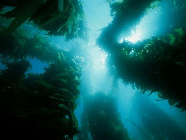underwater wonders 7 Топ 10. Самые удивительные и невероятные вещи, которые можно найти под водой
