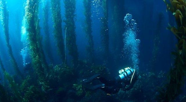 underwater wonders 7 1 Топ 10. Самые удивительные и невероятные вещи, которые можно найти под водой