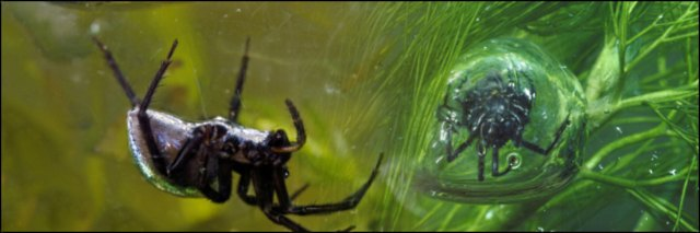 underwater wonders 8 Топ 10. Самые удивительные и невероятные вещи, которые можно найти под водой