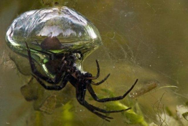 underwater wonders 8 3 Топ 10. Самые удивительные и невероятные вещи, которые можно найти под водой