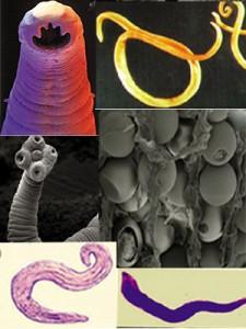 parasites 2 225x300 Преступники в природе. Часть II
