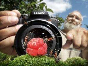 Andrey Pavlov 1 300x224 Тайная жизнь муравьев, сфотографированная Андреем Павловым