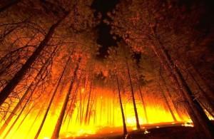 forest fire 300x195 История антропогенных климатических катастроф. Часть II