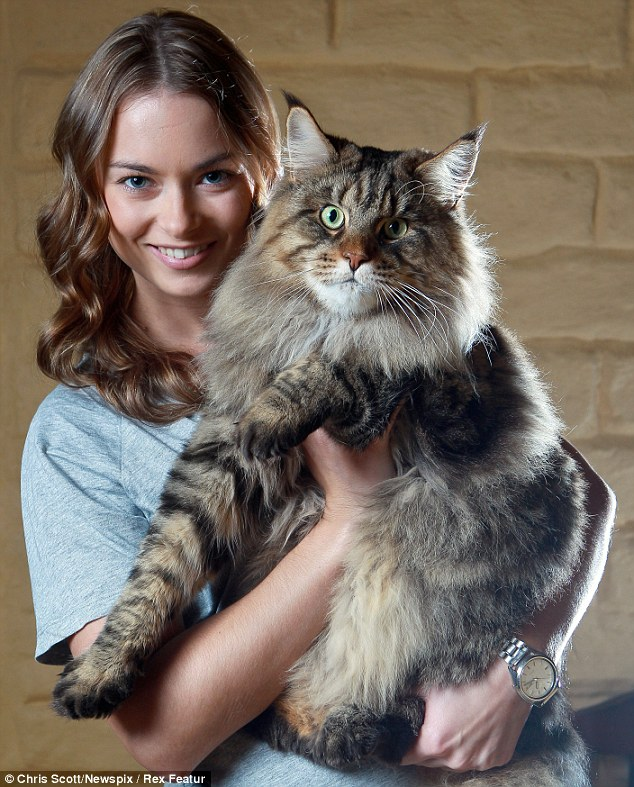 Rupert cat 4 Руперт: самый большой в мире кот