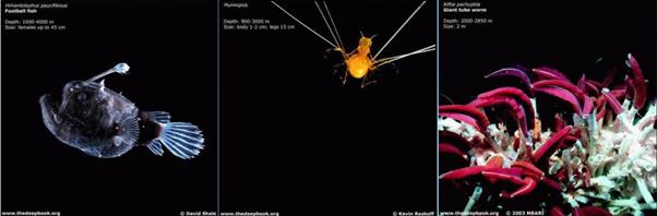 111412 2057 17 Там, где живут пришельцы: Солнечная система