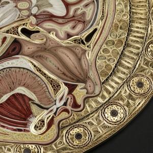 l n 15 300x300 Уроки художественной анатомии от Лизы Нильсон