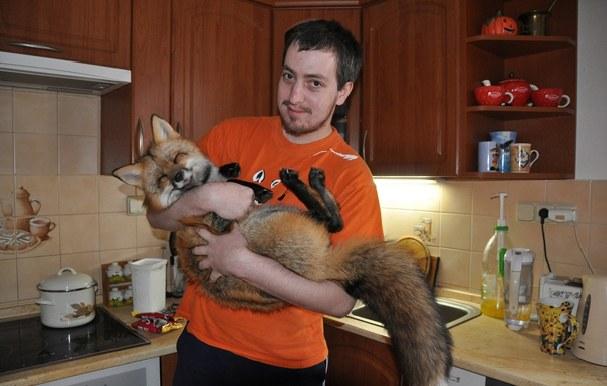 1 Удивительный домашний питомец – лиса по кличке Викси