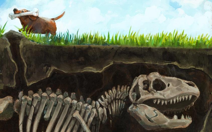 12 Неудачные реконструкции древних животных