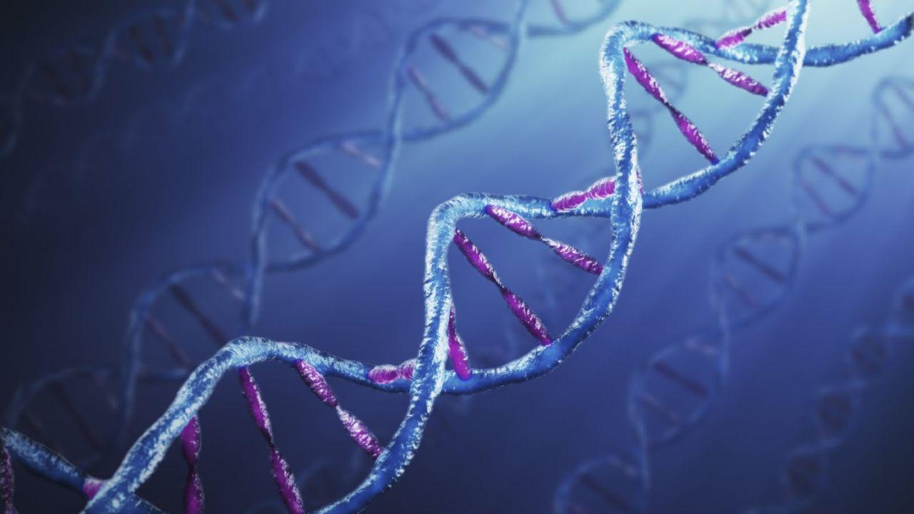 4 Звёзды и гены