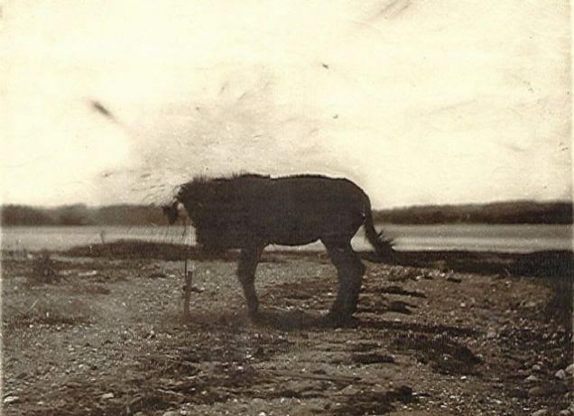 f12 Викторианский фотошоп: странные фотографии XIX века