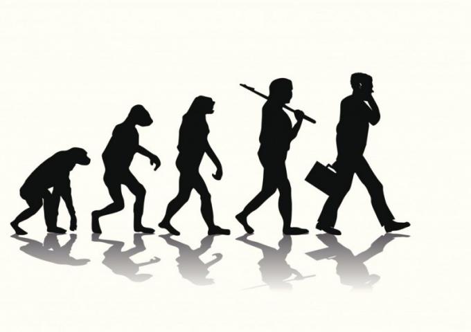 q6 Варианты эволюции